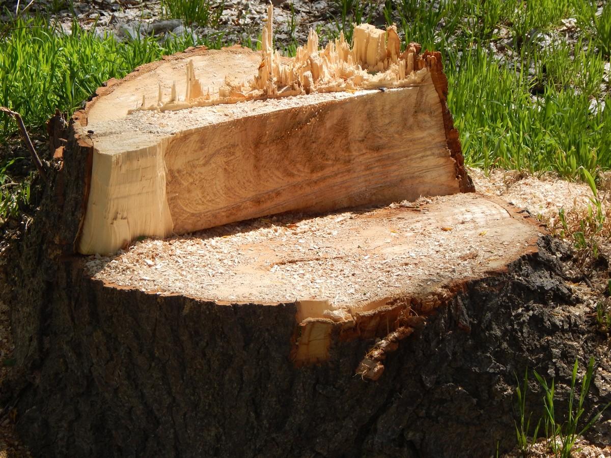 Новая волна вырубки деревьев или как остановить беспредел