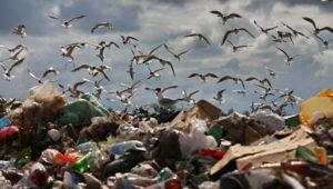 Цифра дня: сколько отходов в Узбекистане образуется ежегодно?