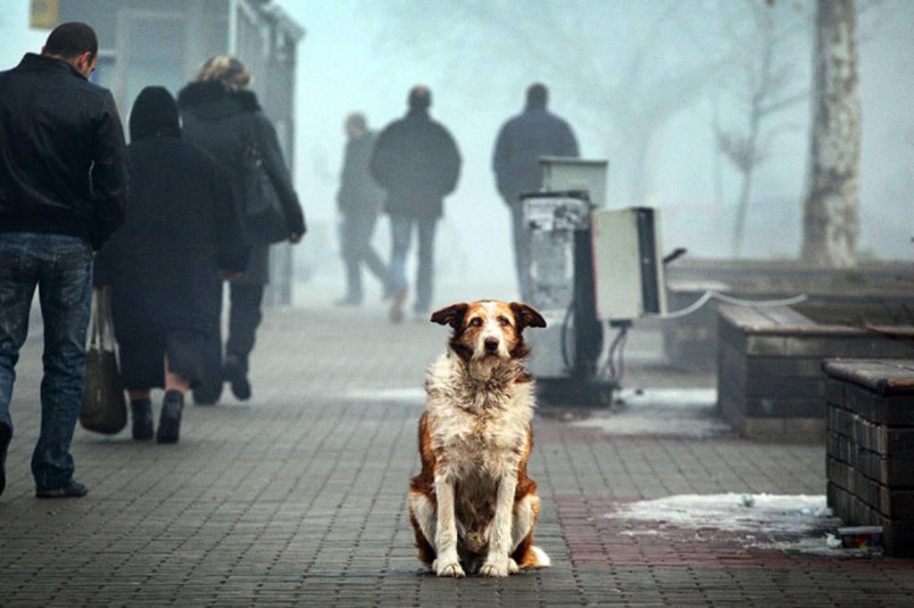 Беспризорные собаки в Узбекистане -  что делать и как быть?