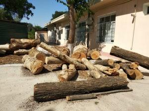 Биоинспекция: Каждый год высаживается по 10 миллионов деревьев в Ташкенте