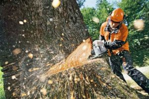 Общественный совет и эксперты представили предложения по проблеме вырубки деревьев