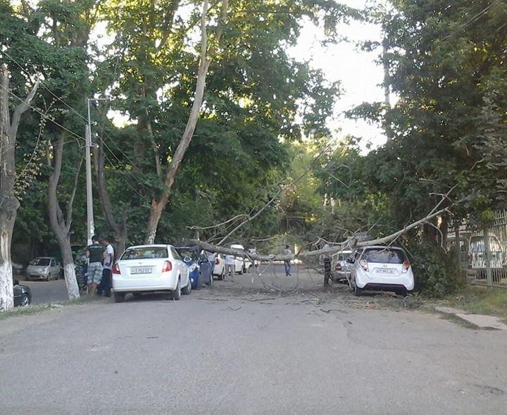 В Ташкенте старое дерево упало на два автомобиля Spark