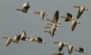 EuroBirdwatch: В Узбекистане пройдет День осенних наблюдений за птицами