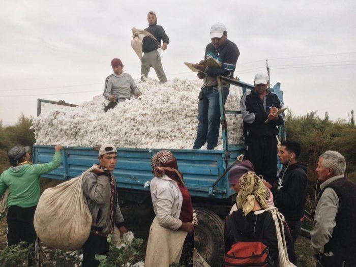 В Ташобласти суд оштрафовал 155 фермеров за недосдачу по хлопку