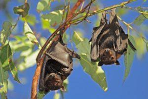 В Узбекистане защитники природы обеспокоены массовым разрушением гнезд летучих мышей людьми