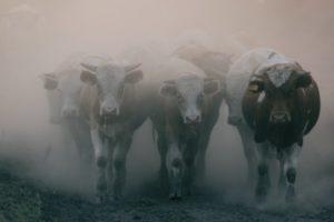 Нехватка воды стала причиной гибели скота в Каракалпакстане