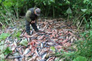 Рыболовы бьют тревогу из-за незаконных способов ловли рыб
