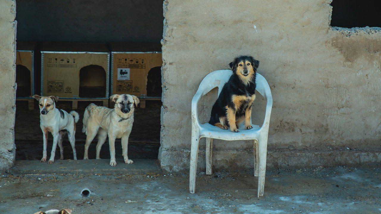 Как живет первый приют для бездомных животных в Узбекистане? (видео)