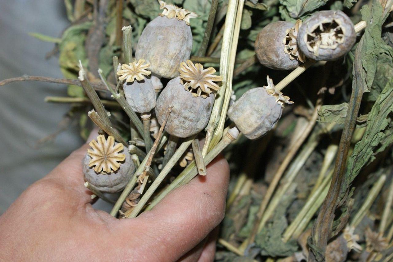 Ферганский пенсионер выращивал на участке опиумный мак