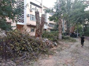Мораторий на вырубку деревьев будет введен до 1 февраля 2020 года