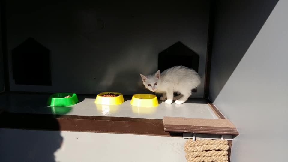 В Ташкенте появился домик для котов