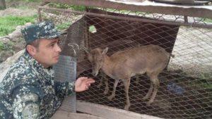 Красной строкой: как не допустить исчезновения редких видов животных в Узбекистане?