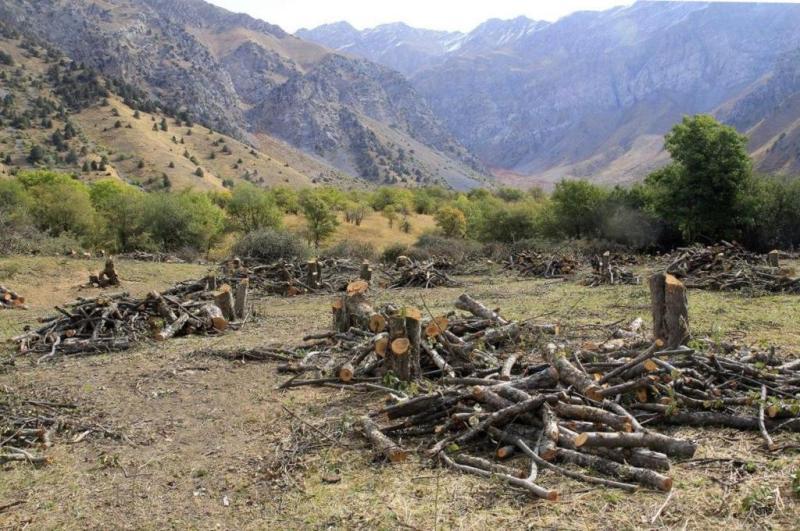В Бостанлыкском районе вырубается яблоневый сад (обновлено)