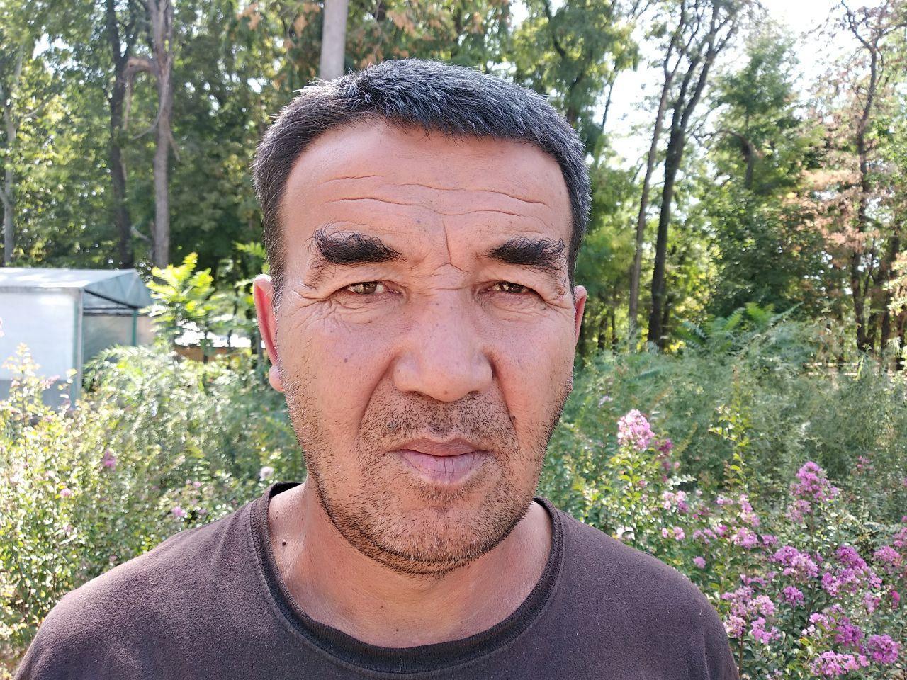 Почему чинары не подходят для придорожного озеленения и каким оно будет в Ташкенте будущего - «Древесное лобби»