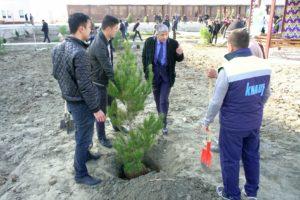 В Бухаре возле крепости Арк высадят 150 деревьев