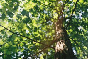 Эффективен ли был мораторий на рубку деревьев и почему в Узбекистане не развивают лесопромышленность