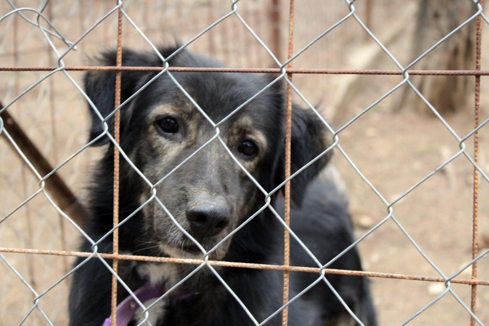 Группа компаний Akfa построит приют для бездомных животных