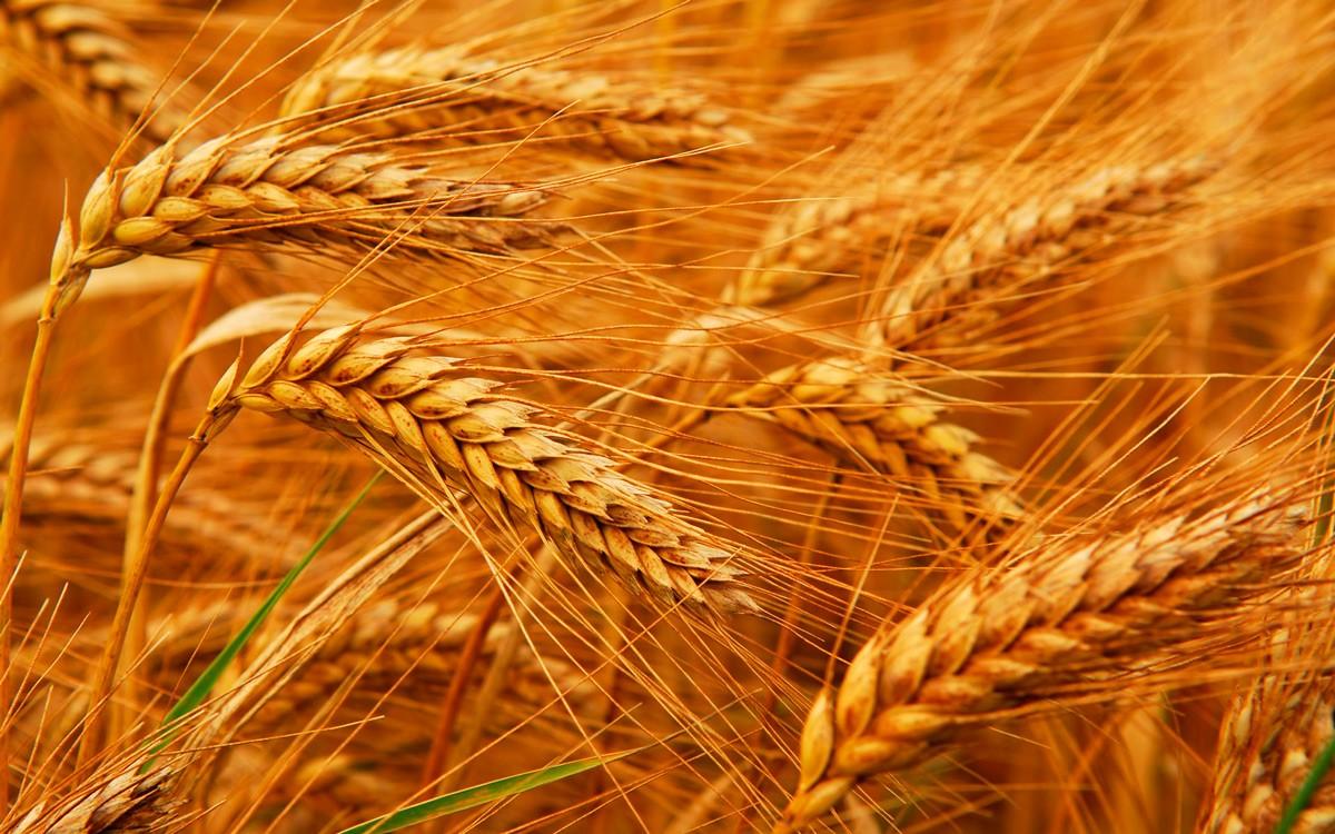 Узбекистан постепенно отказывается от хлопчатника в пользу продовольственных культур