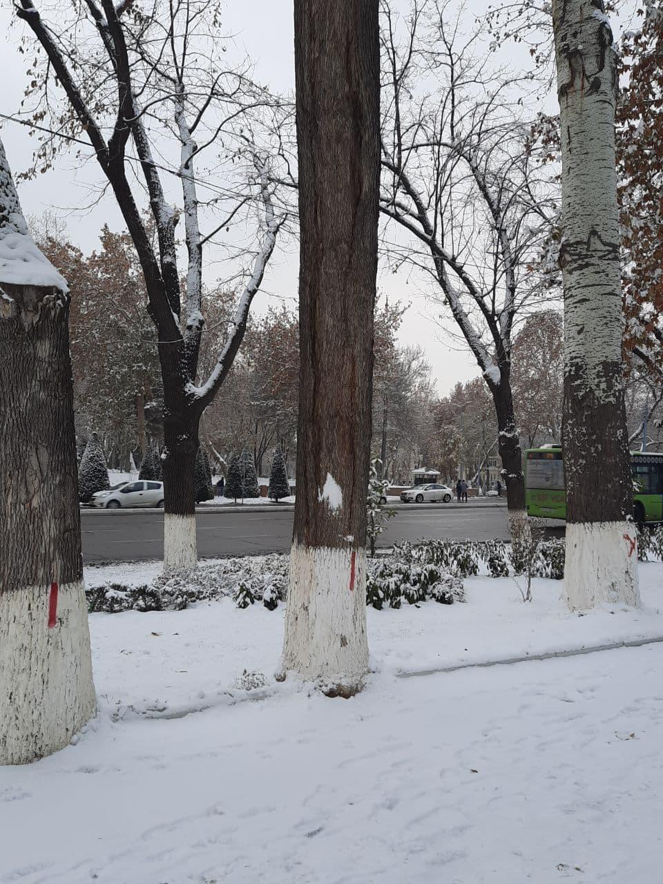 В Госкомэкологии прокомментировали помеченные деревья у дворца «Туркистон» в Ташкенте