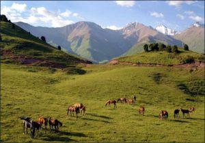 В 2013 году в Узбекистане у браконьеров было конфисковано 262 ружья