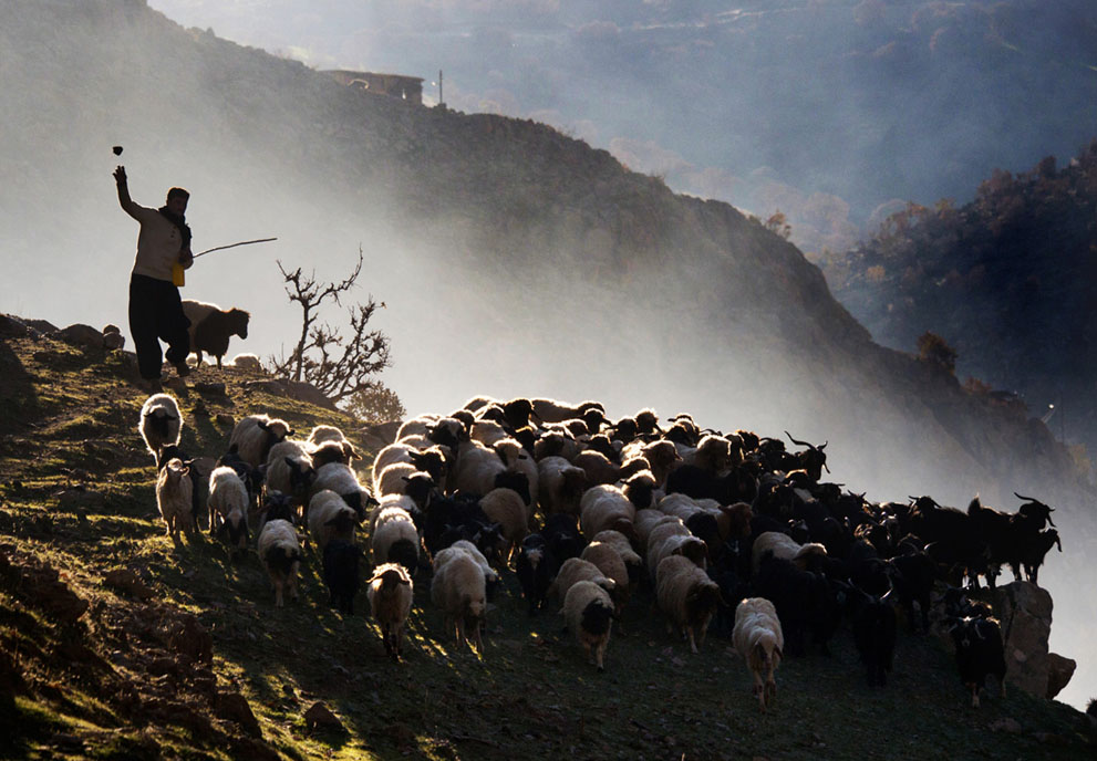 В Узбекистан пытались нелегально перегнать стадо