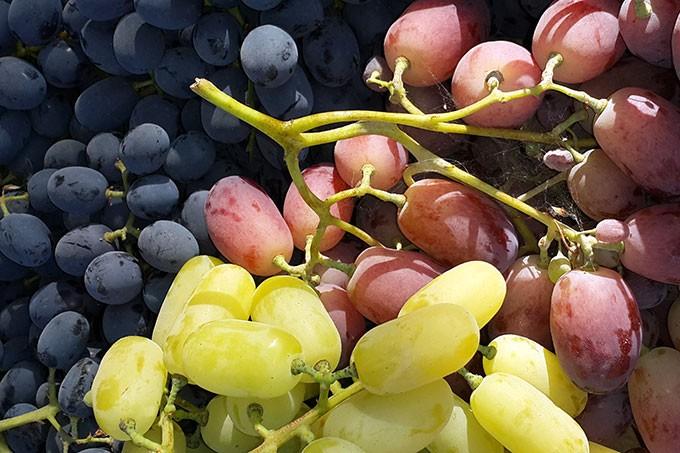 Праздник сбора винограда в Шампань