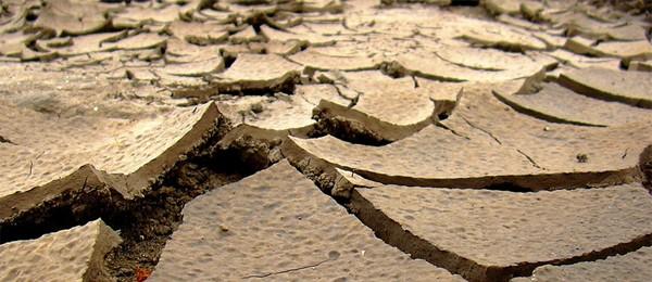 Ўзбекистонда шўрхок ерларнинг унумдорлигини ошириш усули ихтиро қилинди