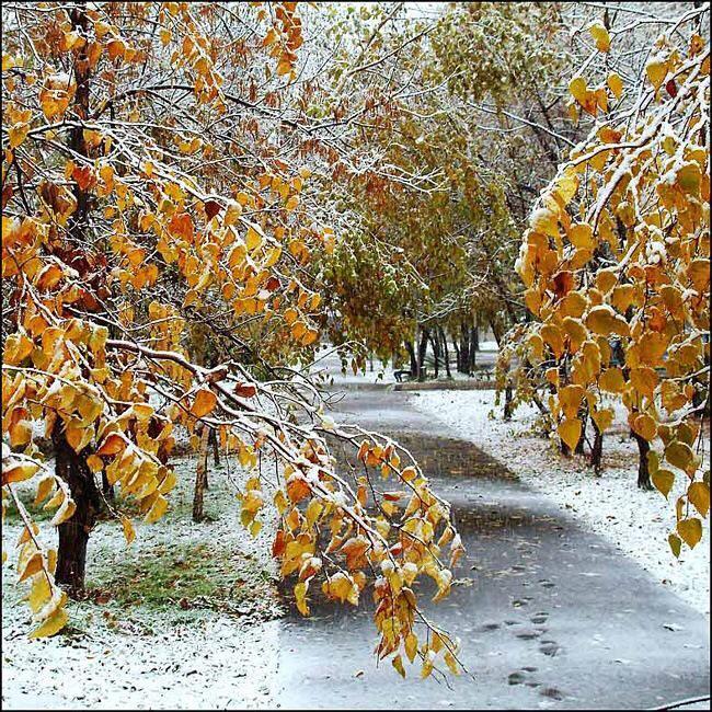28 октябрь куни Тошкентда қор ёғиши мумкин