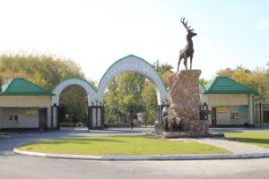 В Ташкентском зоопарке появились гималайские медведи