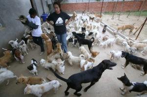 В Узбекистане откроют первый приют для бездомных кошек и собак
