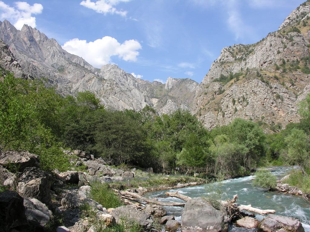 Как сохранить в Узбекистане тугайные леса и популяцию сайгаков?