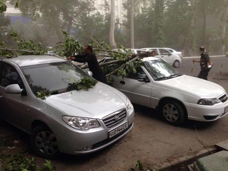 В Ташкенте из-за сильного ветра на автомобили падают деревья (фото)