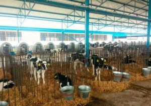 Может ли пакетированное молоко быть на 100 % натуральным?