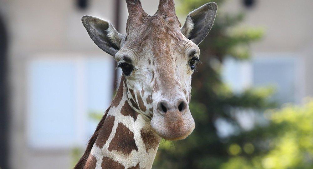 Администрация зоопарка приняла жесткое решение в защиту своих питомцев